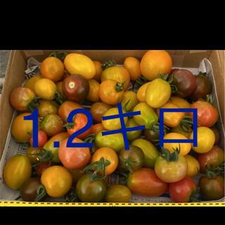 ミニトマト(野菜)