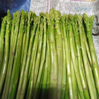 会津産アスパラ規格外3kg(野菜)