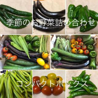 季節のお野菜詰め合わせ 無農薬 コンパクトボックス(野菜)