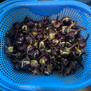 山形県置賜伝統野菜 農家が自家用に作った薄皮丸ナス 安心安全 900g(野菜)