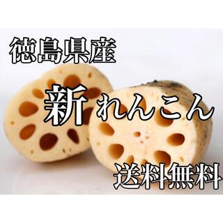 徳島県産 訳ありれんこん箱込み1キロ弱コンパクトボックス送料無料(野菜)