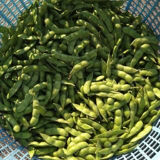 農家直送 新潟県産枝豆(野菜)