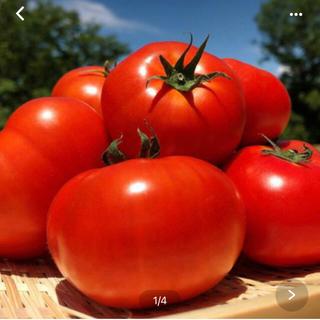 トマト(野菜)