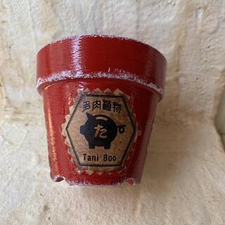 2.5号多肉ラベルリメイク鉢100 レッド リメ鉢 植木鉢 リメイク缶 リメ缶(プランター)