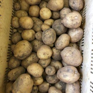 じゃがいも 男爵 とれたて 佐賀県産 無農薬 80サイズ(野菜)