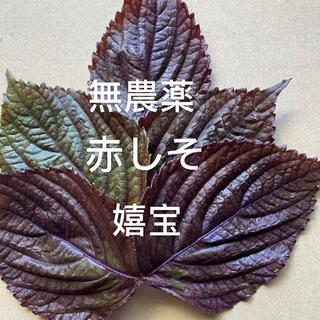 無農薬しそ葉50枚(野菜)