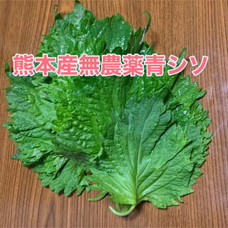 熊本産無農薬青シソ(野菜)