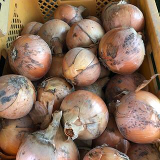 超お買い得!淡路島南あわじ市産、玉ねぎ M、L、2 L 約10kg(野菜)