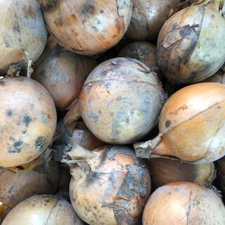 激安販売中!大玉規格外!淡路島産たまねぎ、ML 2Lサイズ10kg混合。(野菜)