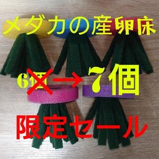 メダカ 産卵床 ☆限定セール☆ 5色計7個 タマゴトリーナ 研磨材なし(その他)