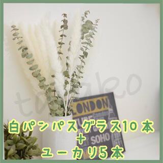 ユーカリ5本 パンパスグラス白10本 ドライフラワー テールリード セット(ドライフラワー)
