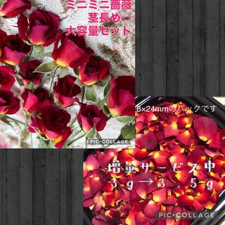 Rigel(りーくん)様専用★ミニミニ薔薇(茎長め)25輪+2輪&花びら3.5g(ドライフラワー)