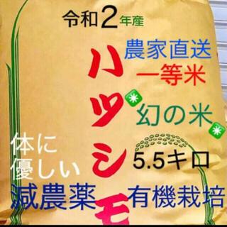 令和2年産✳️有機栽培米 色彩選別済1等米ハツシモ 5.5キロ
