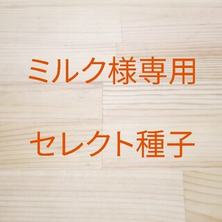 ミルク様専用 セレクト種子 5袋(野菜)