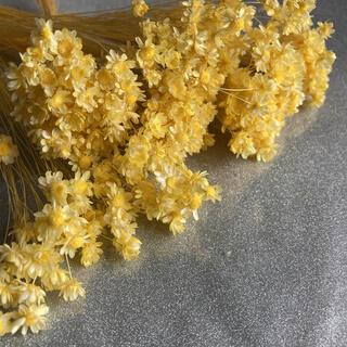 ドライフラワー 花材黄色(ドライフラワー)