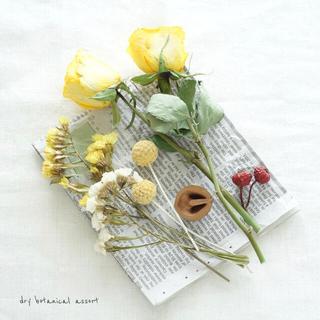 dry botanical /  #4 ドライフラワー 花材  ハンドメイド(ドライフラワー)