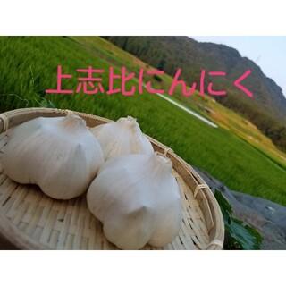 福井県産地直送「上志比にんにく」大粒で糖度の高い最高品種(野菜)