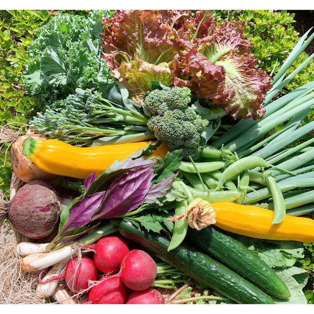 畑直送 無農薬野菜 60サイズ 食品/飲料/酒の食品(野菜)の商品写真