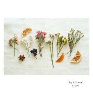 dry botanical /  #9 ドライフラワー 花材  ハンドメイド(ドライフラワー)