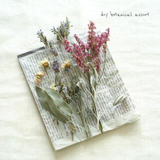 dry botanical /  #5 ドライフラワー 花材  ハンドメイド(ドライフラワー)