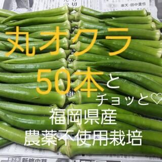 朝どれ丸オクラ50本とチョッと☆ポスト投函
