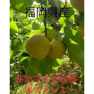 幸水梨 訳あり4.5キロ(フルーツ)
