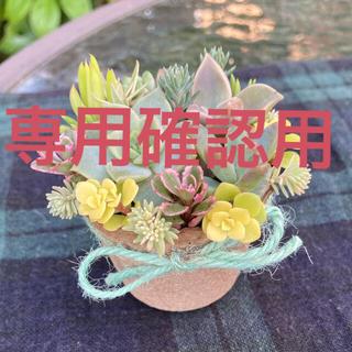 初夏寄せ ミントアイス 多肉寄せ植え そのまま飾れる(その他)