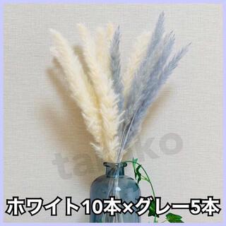 パンパスグラス 白10本 グレー5本 ミックス ドライフラワー テールリード(ドライフラワー)