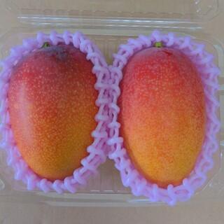 宮崎産 マンゴー 果物 送料込み(フルーツ)