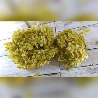 アナベル紫陽花  ドライフラワー  (ドライフラワー)
