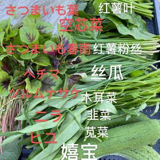 無農薬野菜詰め合わせ60サイズ(野菜)