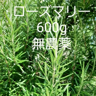 採れたて ハーブ ローズマリー600g 切り枝 無農薬(野菜)