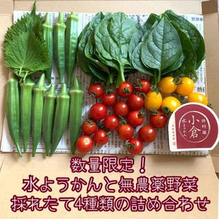 数量限定!水ようかんと無農薬野菜*採れたて4種類の詰め合せ*野菜セット*ネコポス(野菜)