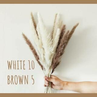 パンパスグラス ホワイト ブラウン ドライフラワー おしゃれインテリア 15本(ドライフラワー)