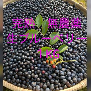 💝オリンピック記念価格💝自然農法 手摘み 生ブルーベリー1KG(フルーツ)