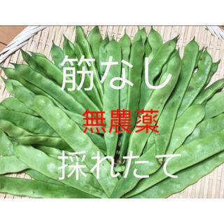 無農薬栽培モロッコインゲン(野菜)