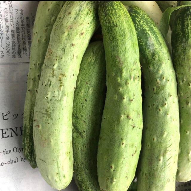 訳あり! 無農薬 半白きゅうり 食品/飲料/酒の食品(野菜)の商品写真