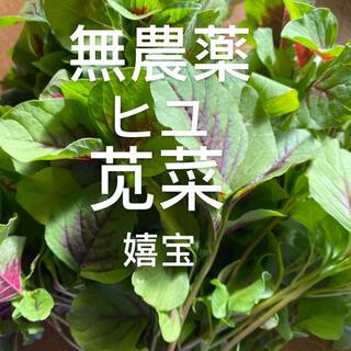 無農薬野菜ヒユ250g(野菜)