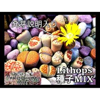 リトープス ミックス 種子 90粒+a  発芽説明入り(その他)