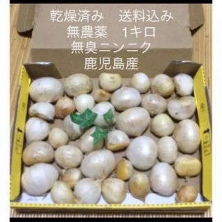 鹿児島県産 無農薬 1キロ 無臭ニンニク 天日干し 乾燥済み 新鮮 にんにく
