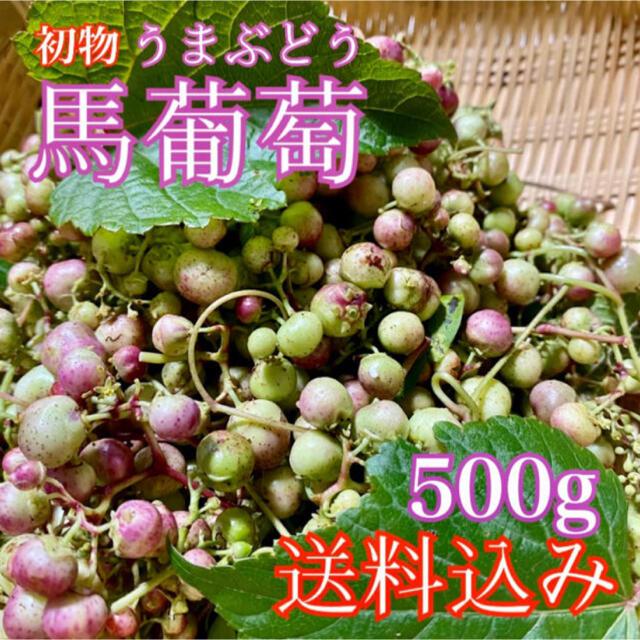 【無農薬天然】馬葡萄 ブスの実 野葡萄 うまぶどう 薬膳酒作りに  食品/飲料/酒の食品(野菜)の商品写真