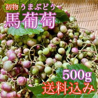 【無農薬天然】馬葡萄 ブスの実 野葡萄 うまぶどう 薬膳酒作りに (野菜)