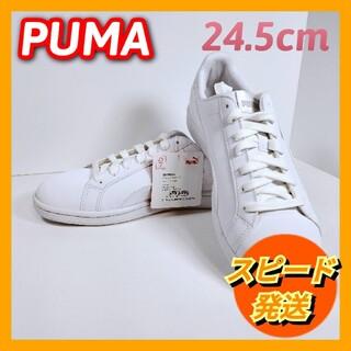 プーマ(PUMA)の【新品】プーマ スマッシュ バック  (24.5cm)(スニーカー)