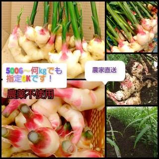 (1㎏)農薬不使用!とっても美味しい新生姜