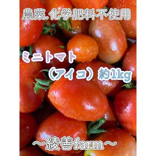 【綾善farm】農薬・化学肥料不使用のミニトマト(アイコ)1kg