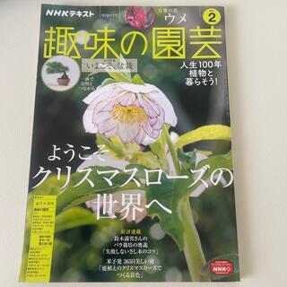 NHK 趣味の園芸 2021年 02月号(専門誌)