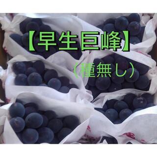 ぶどう【早生巨峰】2キロ箱(フルーツ)