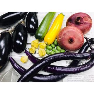 採りたて新鮮✧*。旬野菜の詰め合わせ 60size 野菜セット 無農薬(野菜)