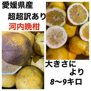 愛媛県産 超超訳あり河内晩柑8〜9キロ(フルーツ)