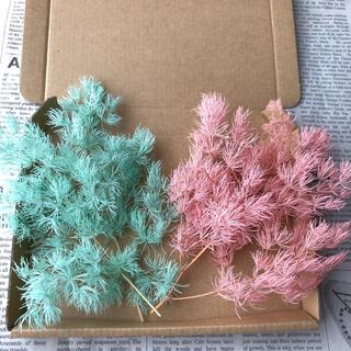 花材 ミリオクラダス 2色セット(プリザーブドフラワー)